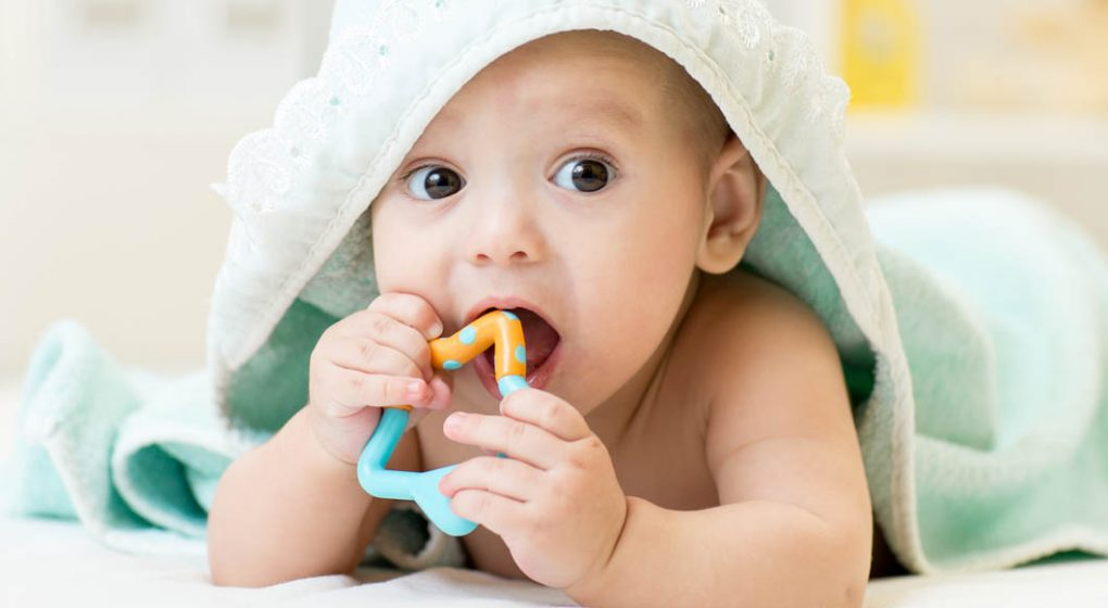 Best Teething   Chewing Toys  2019 Guide  521bbf0be605